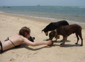 Едят ли собаки кокосы. Или день в Рэди форте